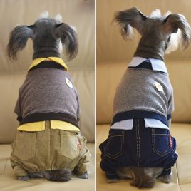 Schnauzer Stylish Fall Winter Clothes